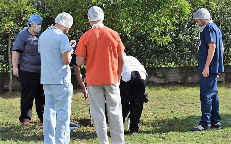 Tenencia responsable de animales domésticos en ambiente rural y urbano de la localidad de Quehué